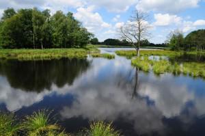 Nette Seen, Krickenbecker Seen, Rohrdommel-Projekt